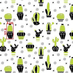 Kaktusy seledynowe wz664